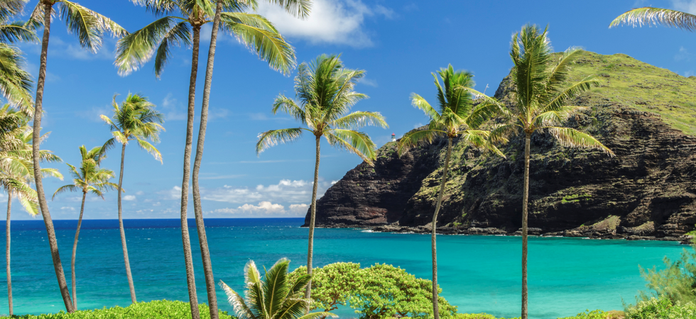 Hawaii Ocean View with Palm Trees and Volcanic Rock