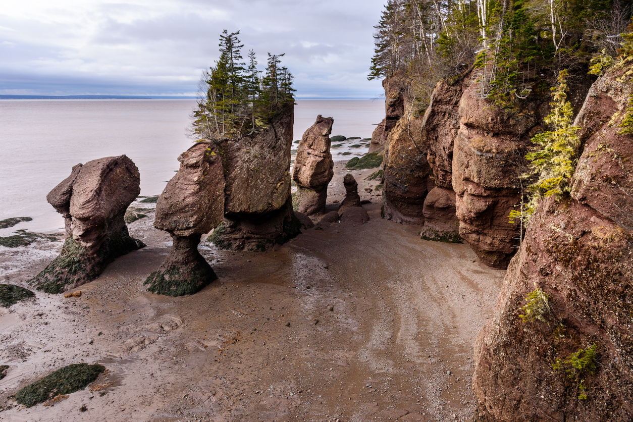 Hopewell Rocks Bay of Fundy during lowtide.